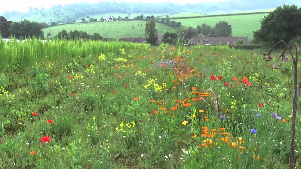 Canh tác rau hữu cơ ở nước Anh