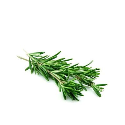 La Hương Thảo Rosemary