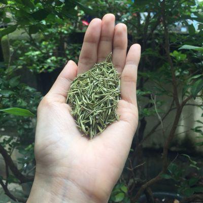 hương thảo khô